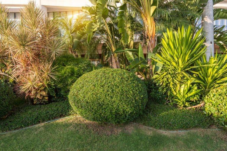 Un jardín con un seto redondo recortado