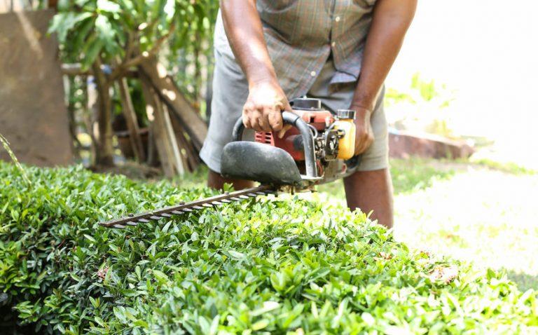Jardinero podado arbusto con cortasetos a gasolina