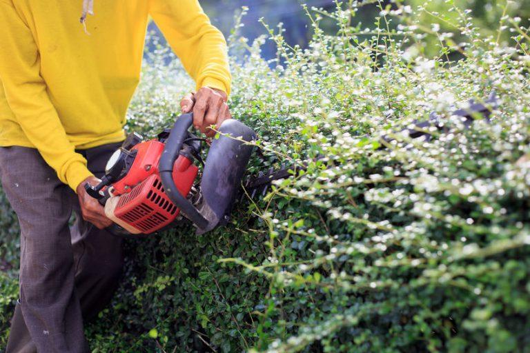 Un hombre cortando arbusto en la calle