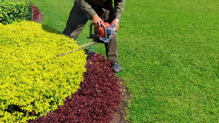 Jardinero podando arbusto con cortsetos a gasolina