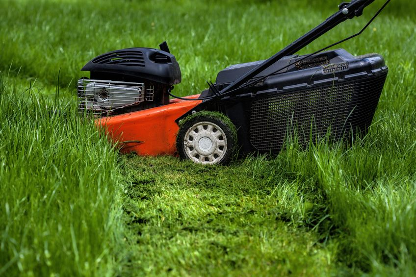 mower standing in a garden