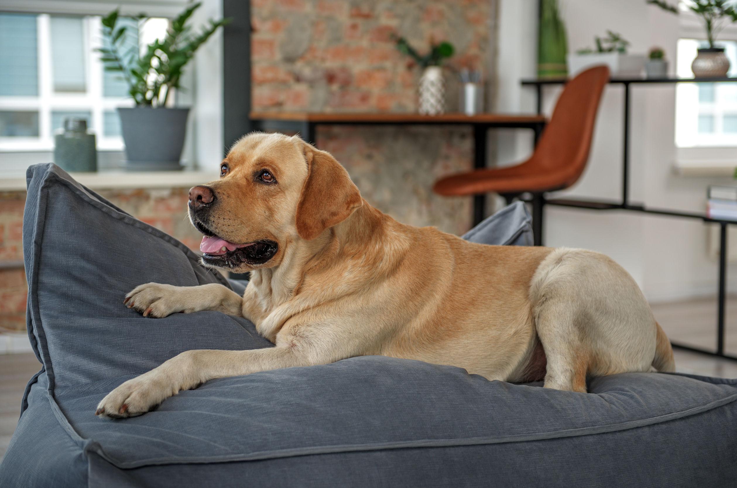 Colchón para perro: ¿Cuál es el mejor del 2021?