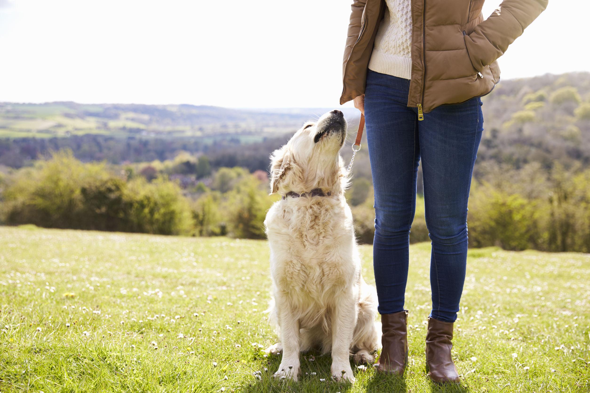 Silbato para perro: ¿Cuál es el mejor del 2021?