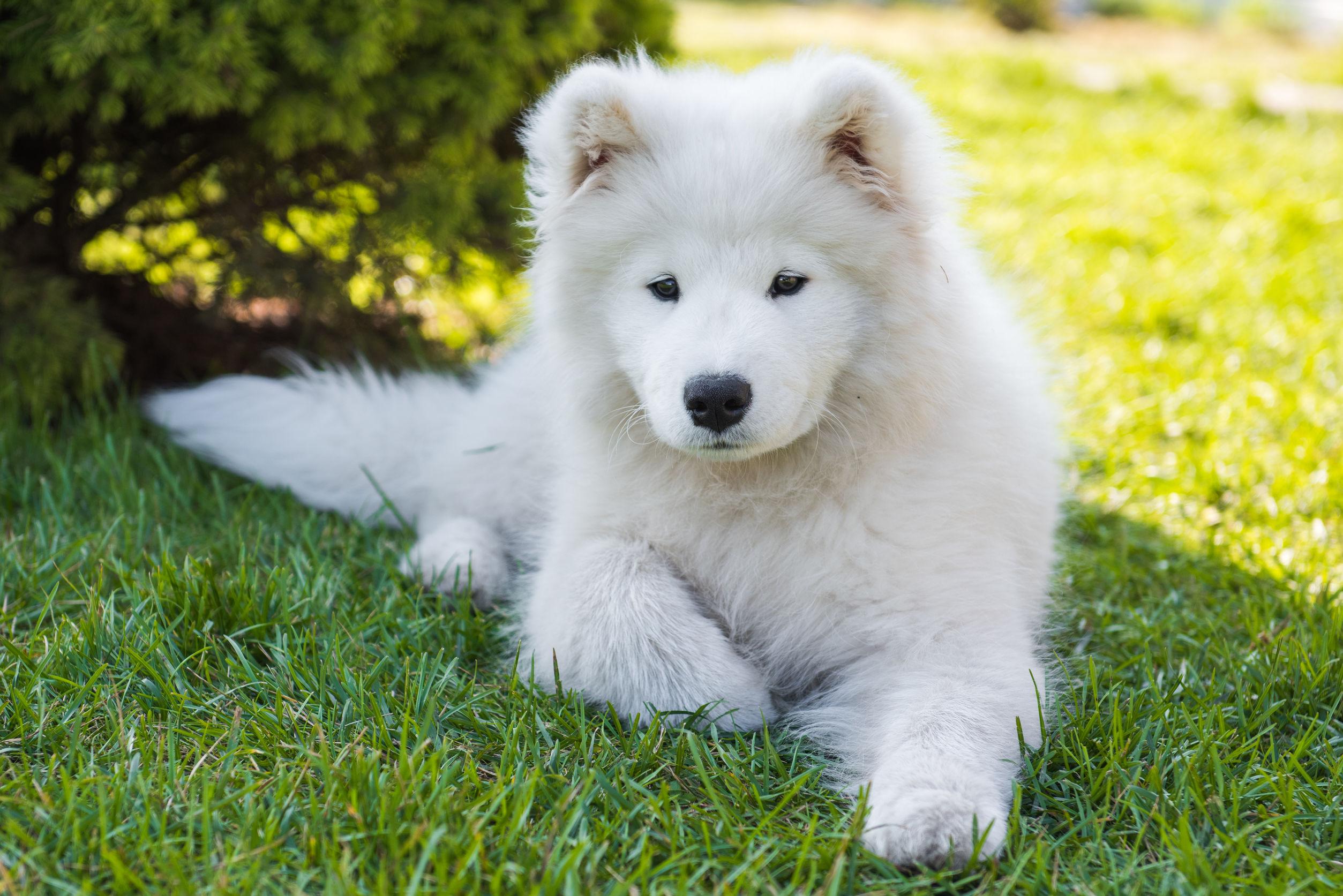 Libros para adiestrar a un perro: ¿Cuál es el mejor del 2021?