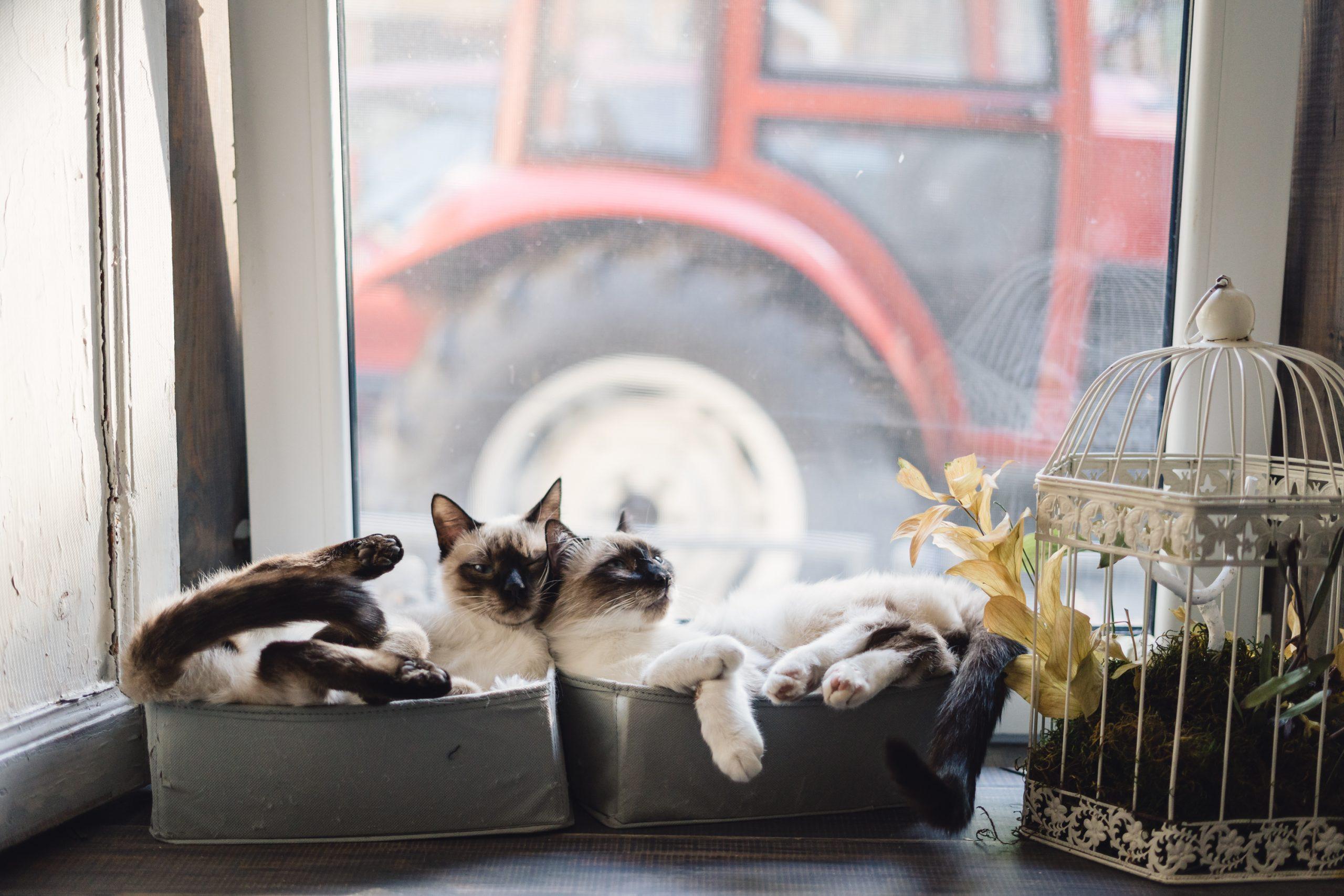 gatos descansando en caja