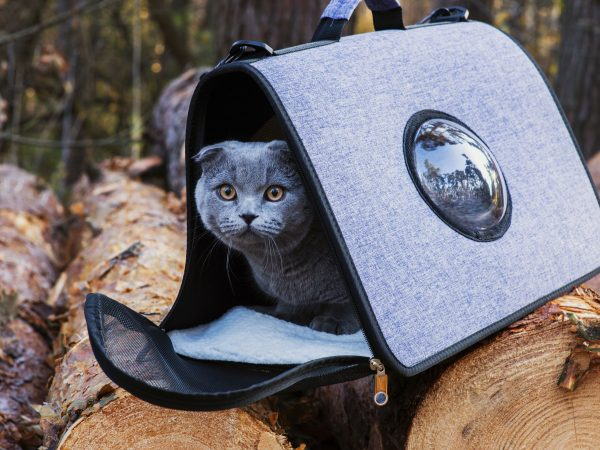 Walk in the autumn forest on a sunny day with your favorite cat in a convenient bag for animals with an illuminator window