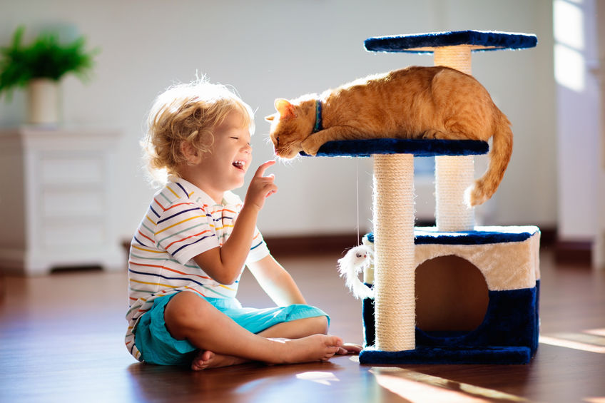 niño jugando con gato