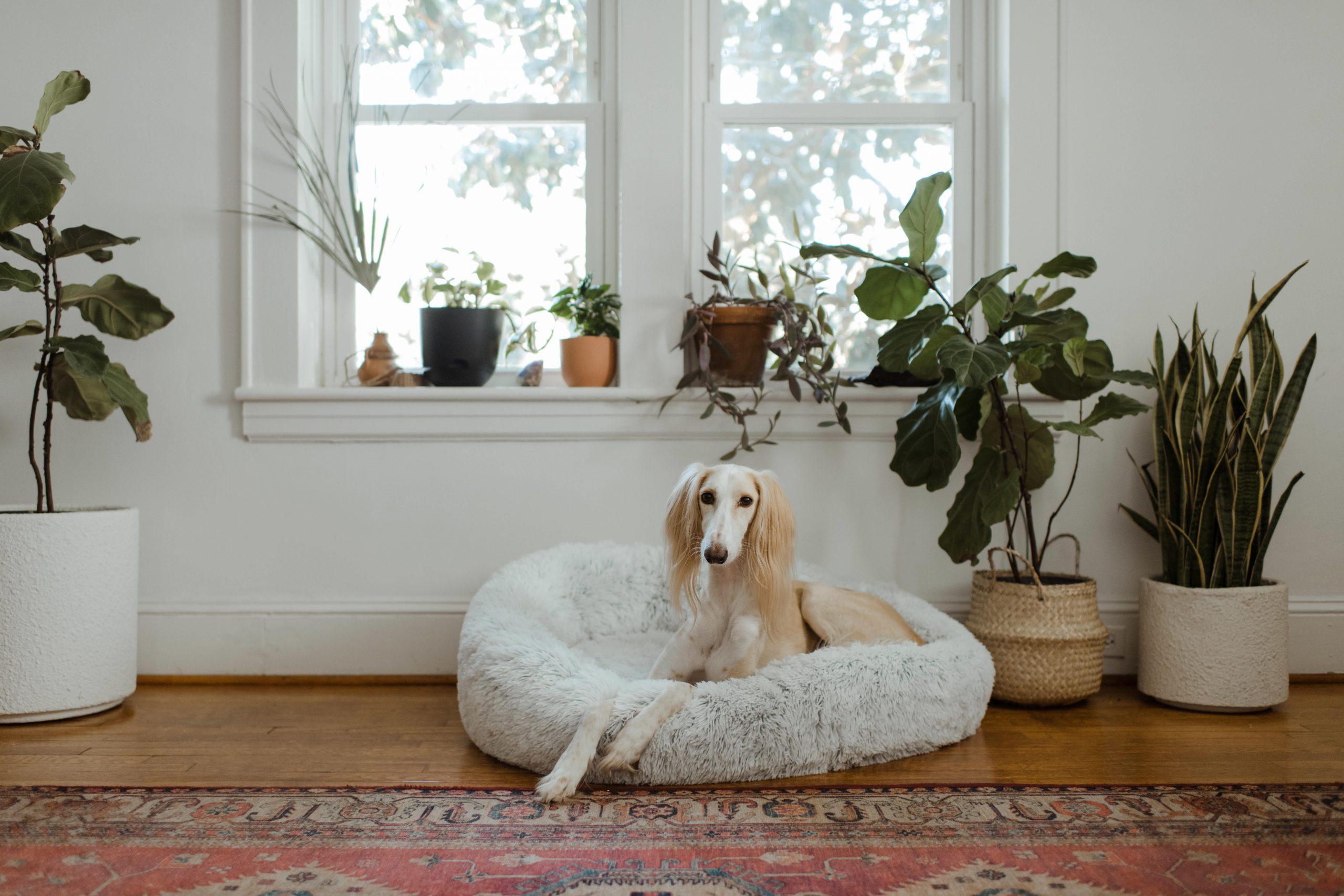 Perro de raza grande en cama afelpada
