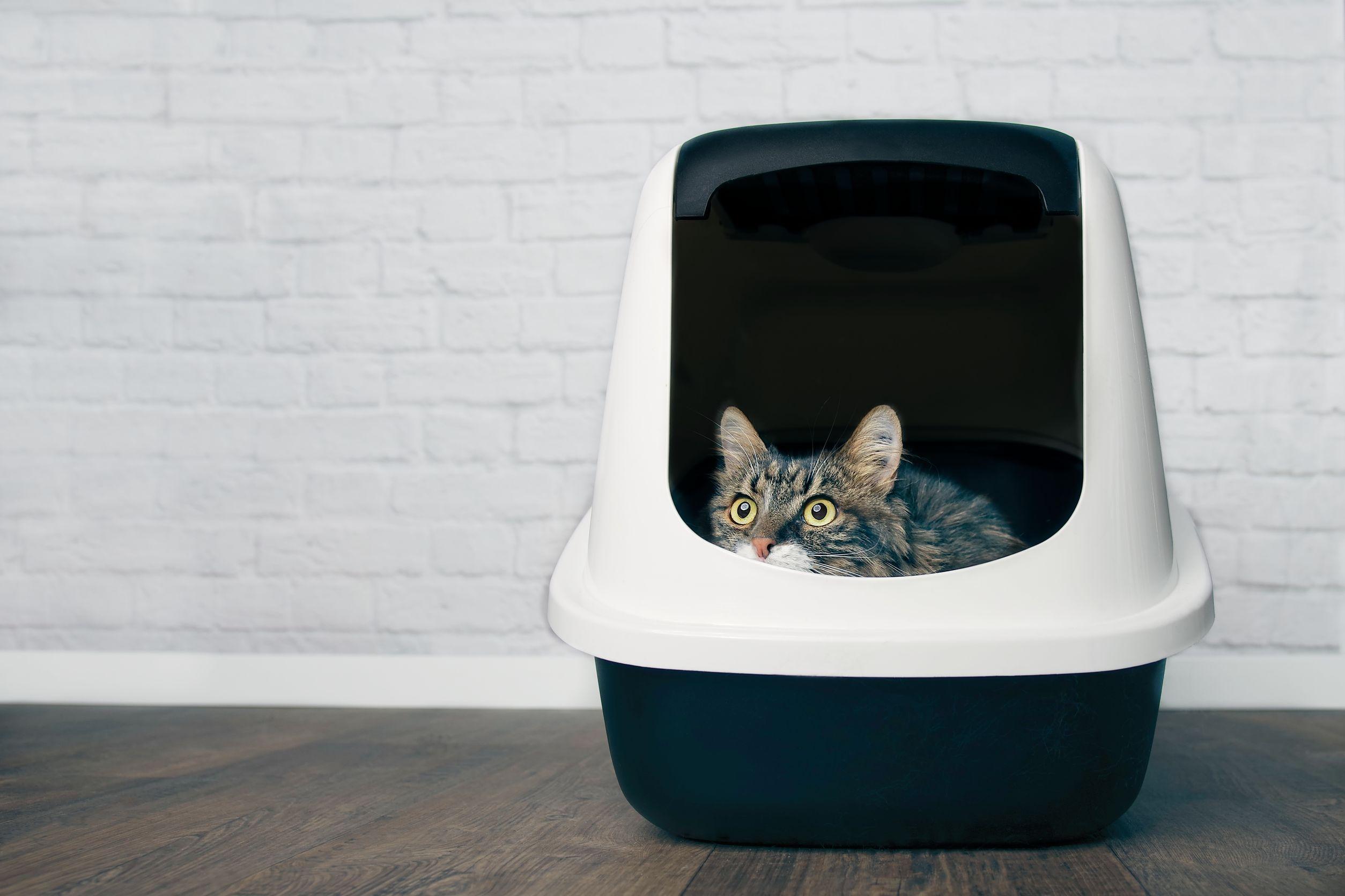 caja de arena para gato