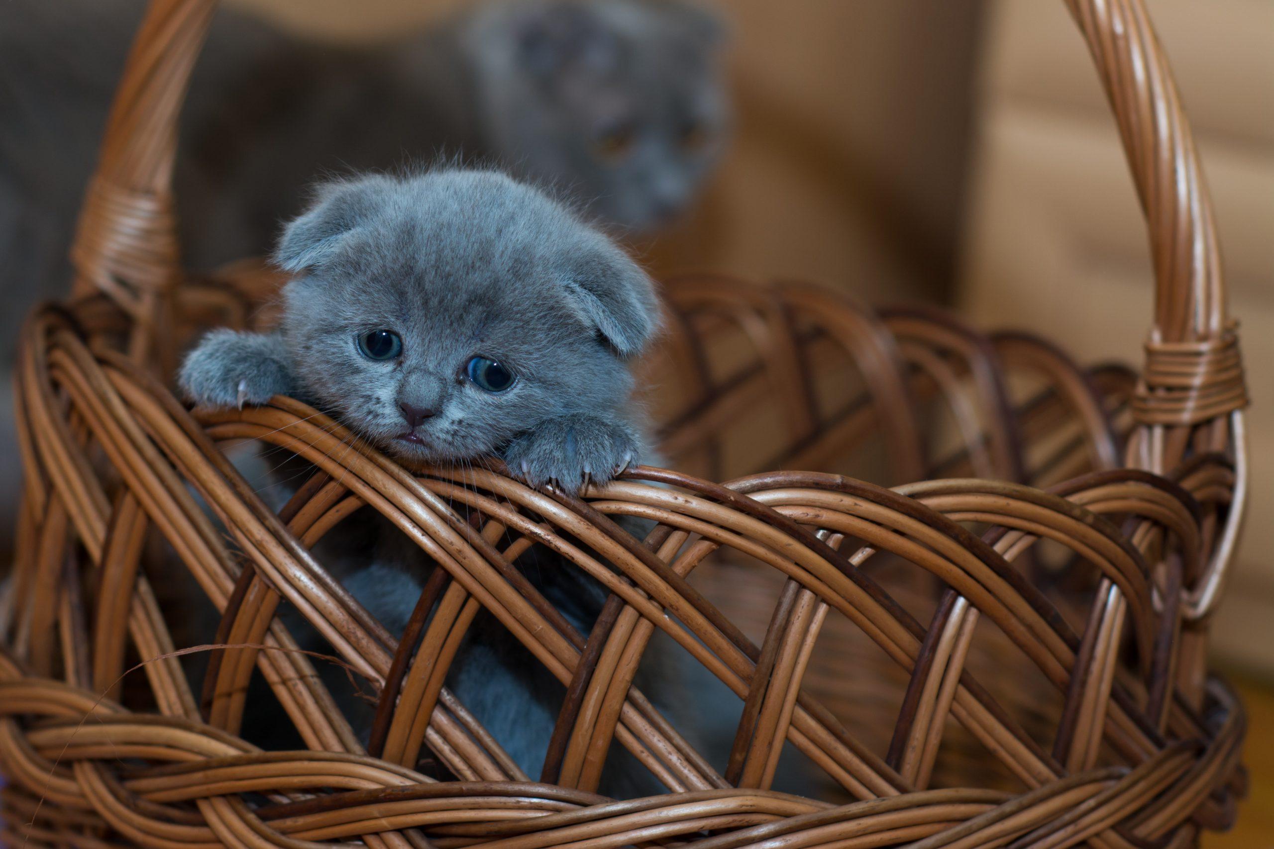 gatito sobre canasta