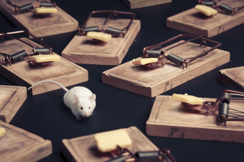 ratoneras y raton