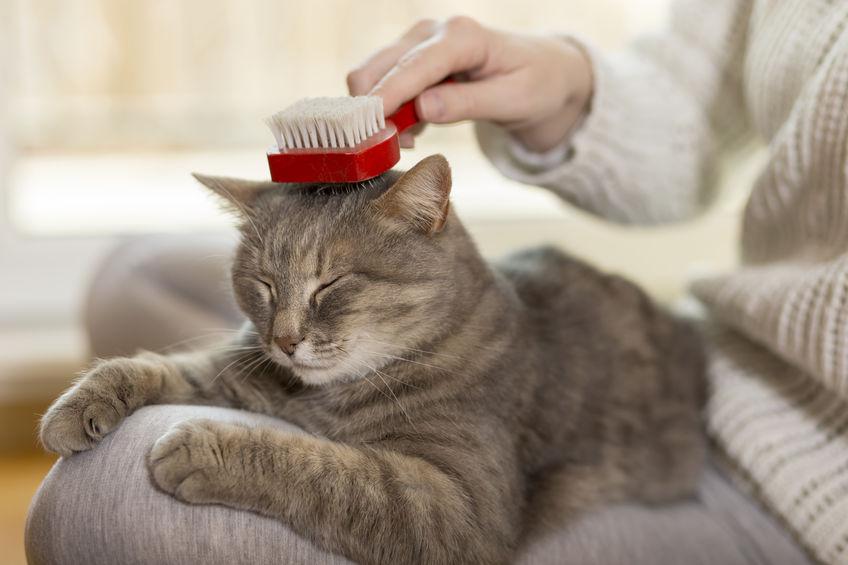 gatito siendo cepillado