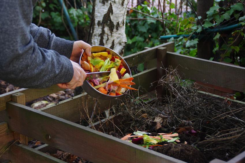 abono para plantas casero