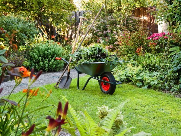 10550318 – evening after work in summer garden with wheelbarrow, shovel and rake – horizontal
