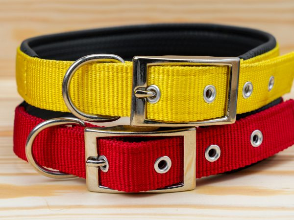 Pet collars stack for pet on wooden background