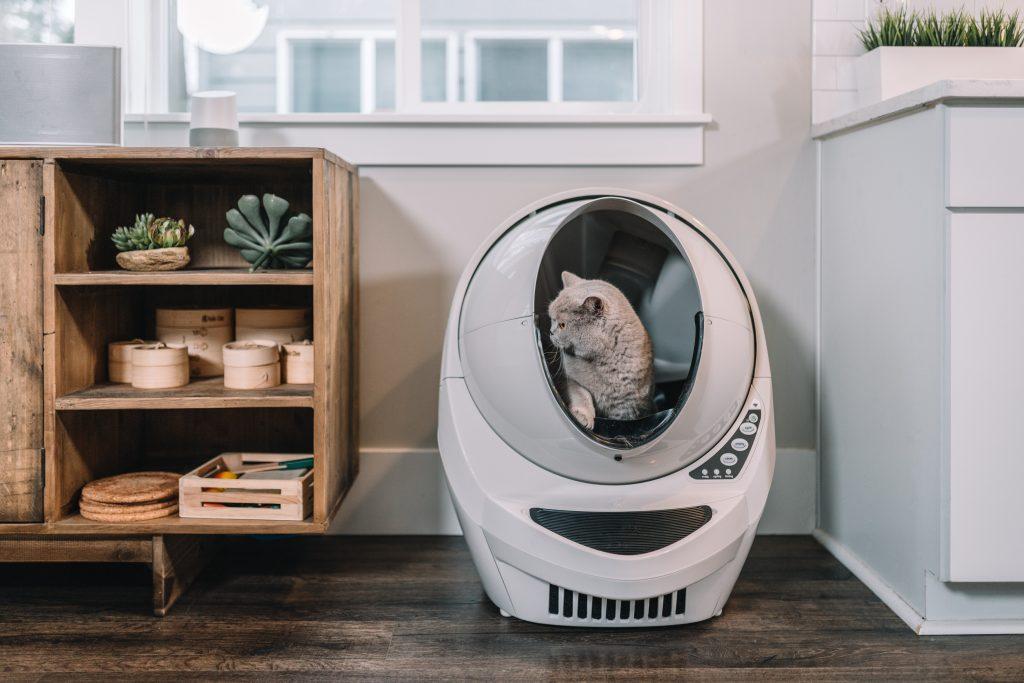 gato dentro de arenero