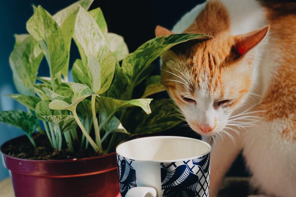 gato cerca de planta