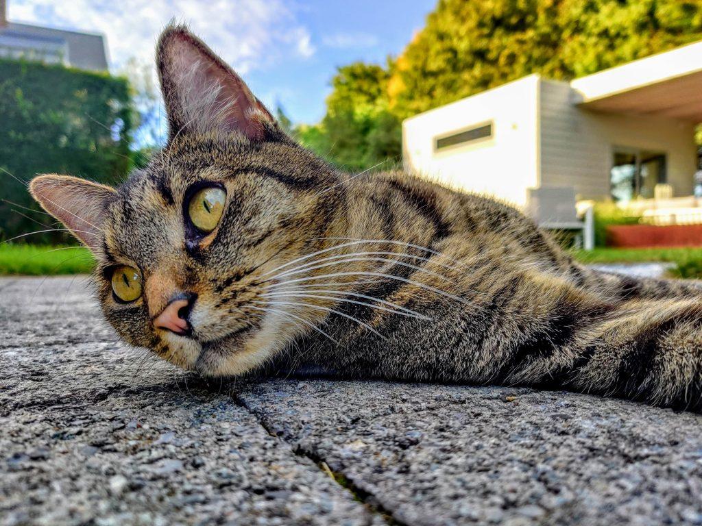 gato en el suelo