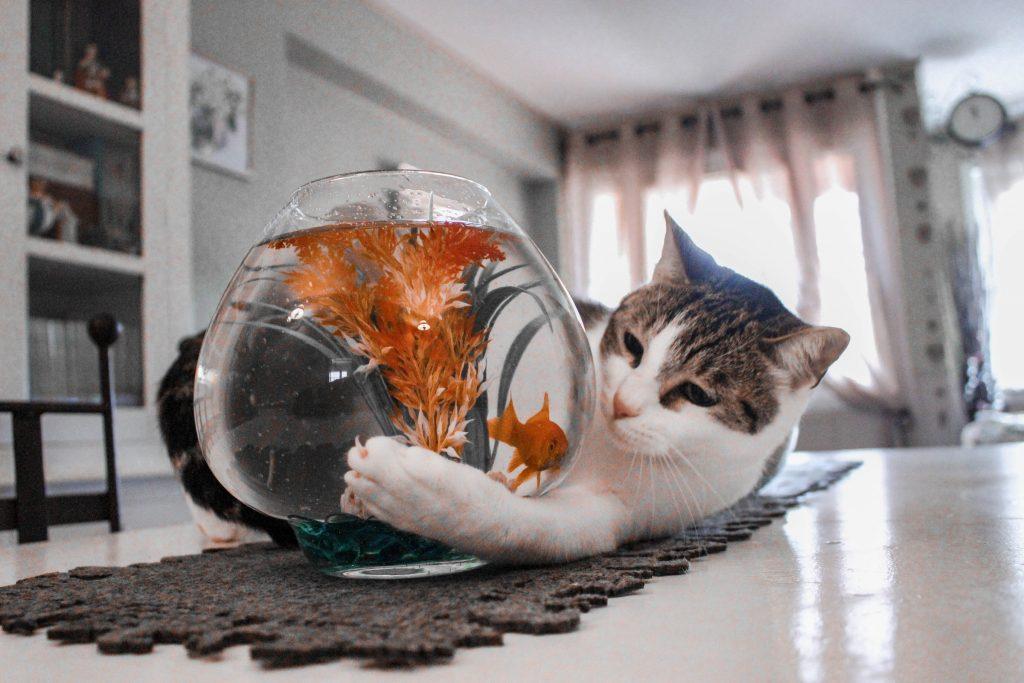 gato en pecera