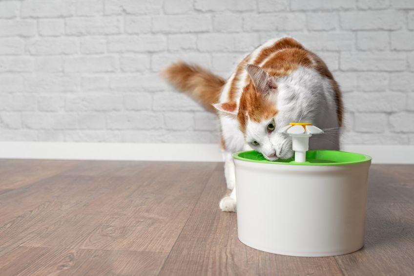 gato tomando agua