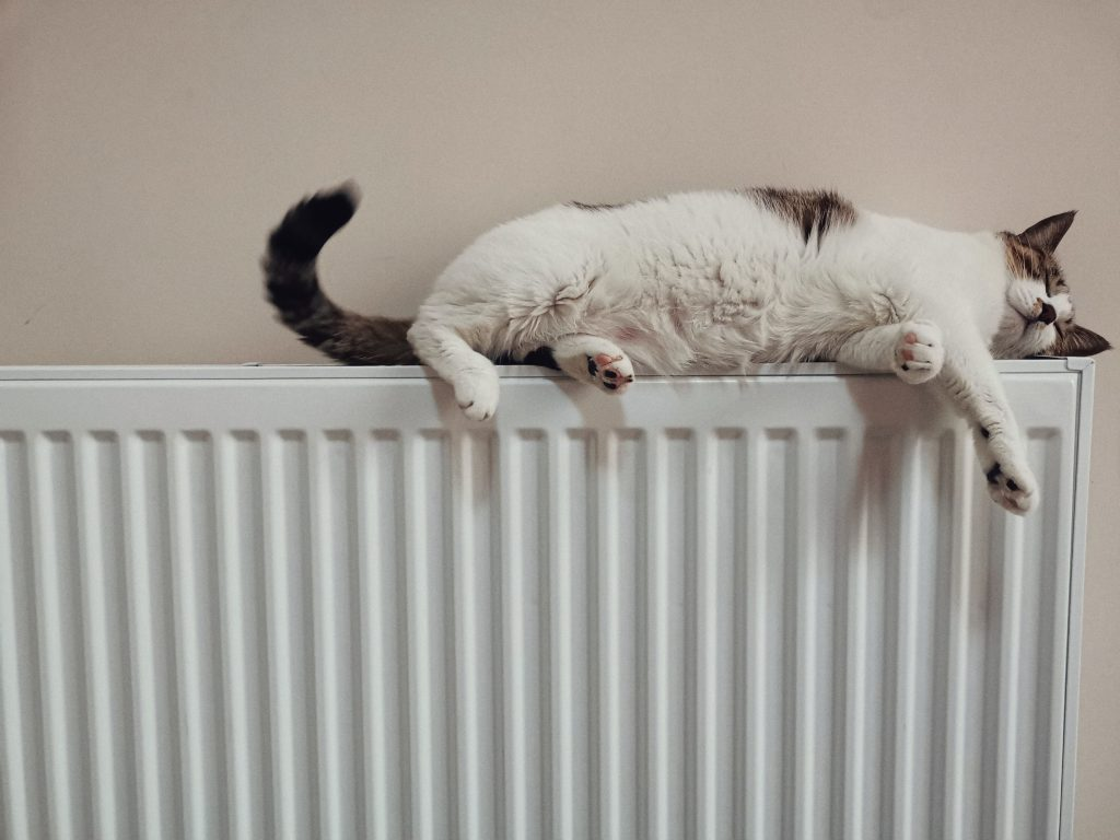 gato radiador