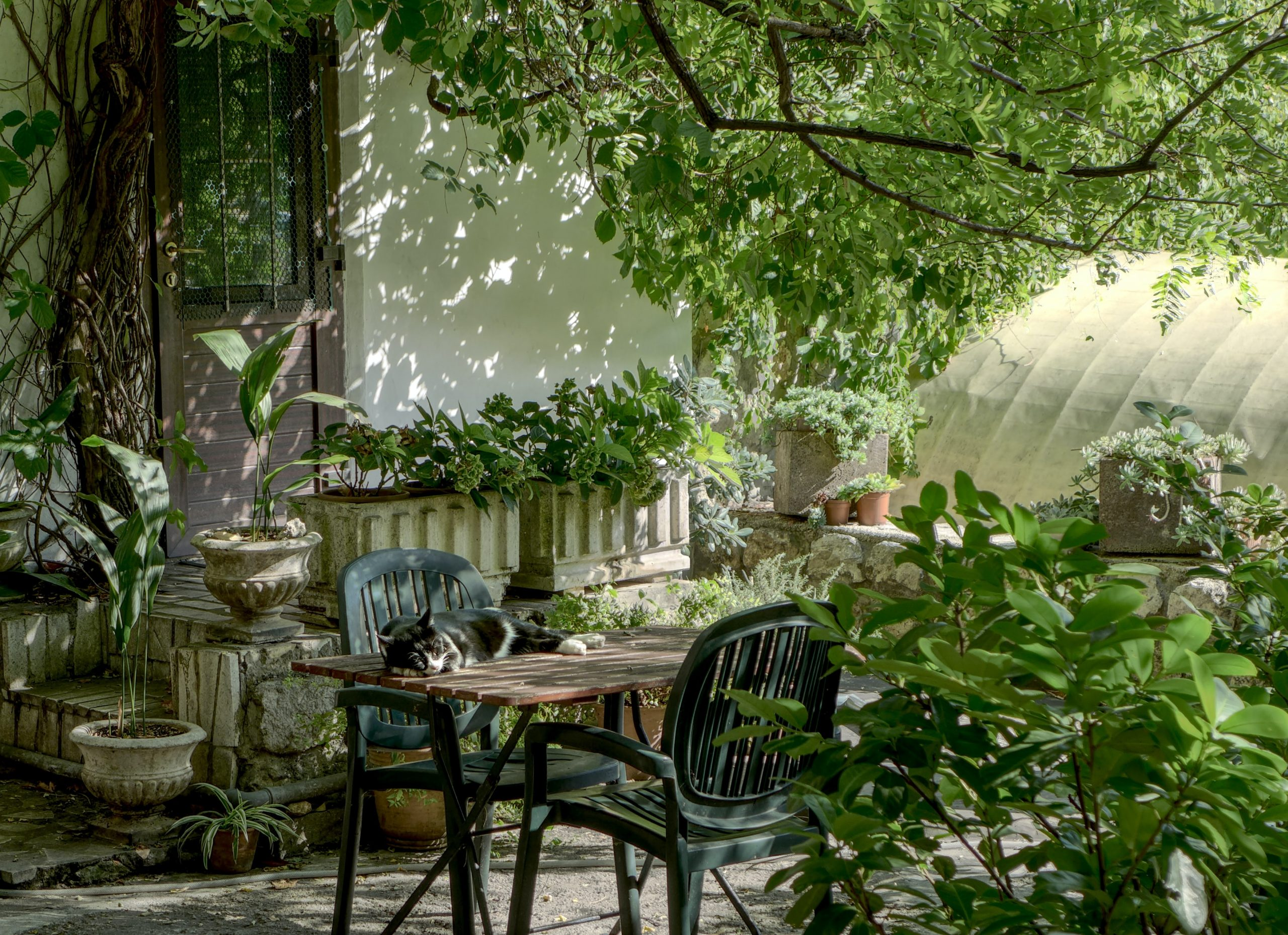 Dos sillas de jardin color verde
