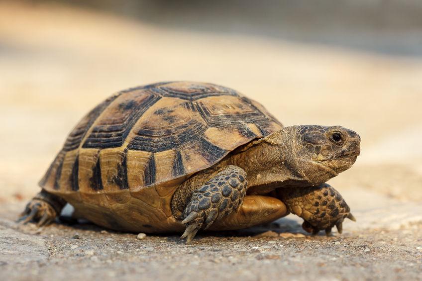 tortuga en suelo