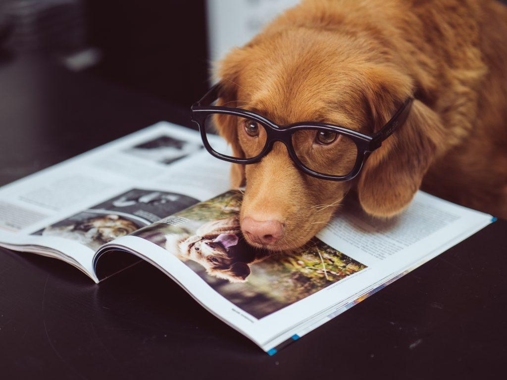 Perro gafas para ver con su cabeza apoyada encima de una revista sobre perros.