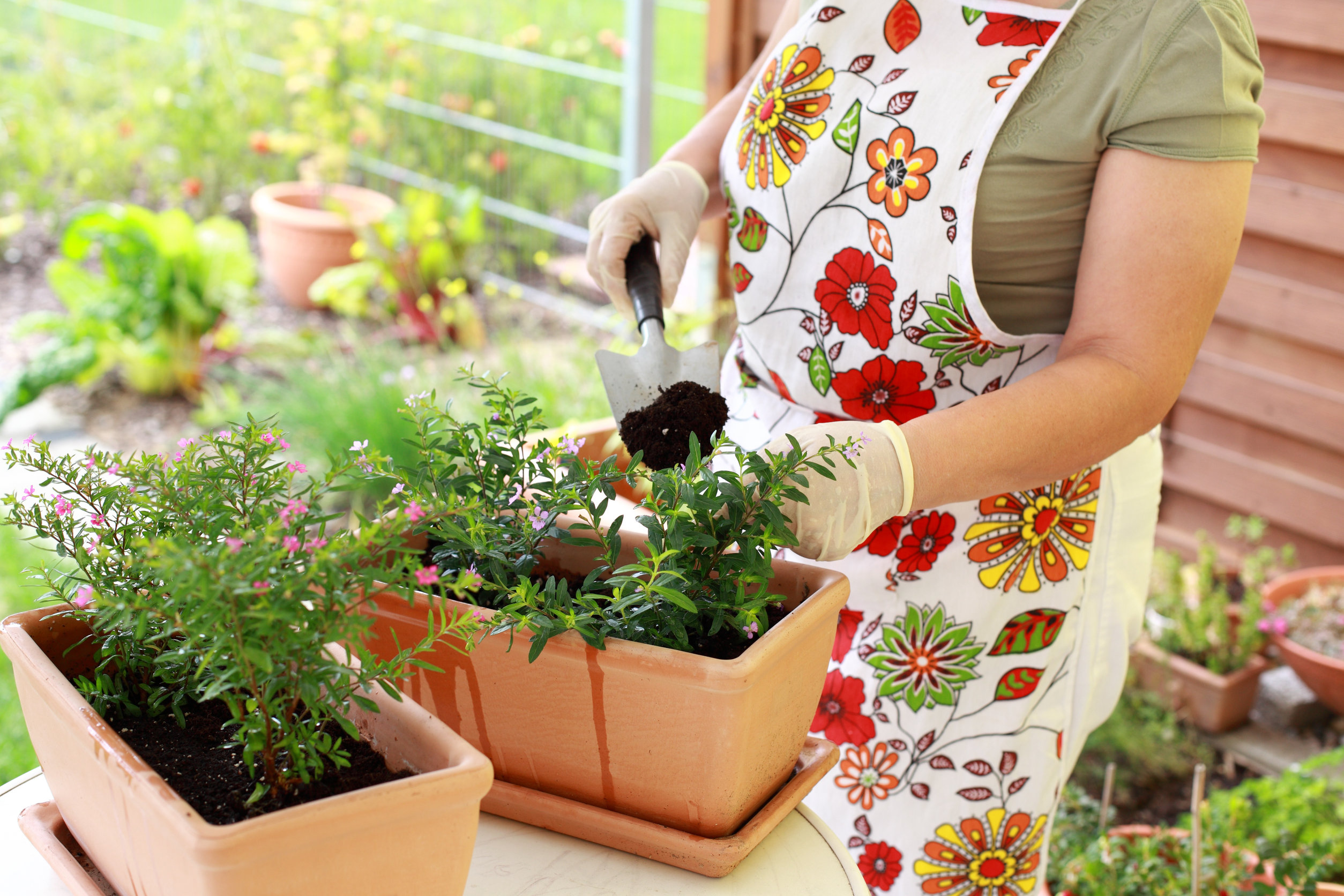 Persona plantado flores en maceta