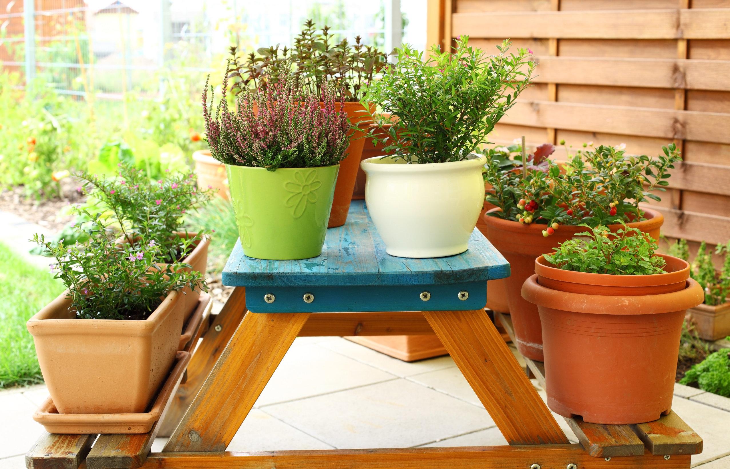 Varias macetas en mesa de madera